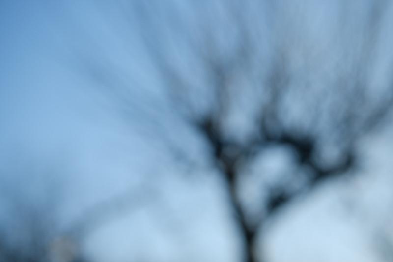 03.02.2019, Hamburg, Deutschland - Unscharfer Garten. Baumsilhouette. (Unschaerfe, Licht, Lichtreflexe) MODEL RELEASE: NOT APPLICABLE, PROPERTY RELEASE: NO