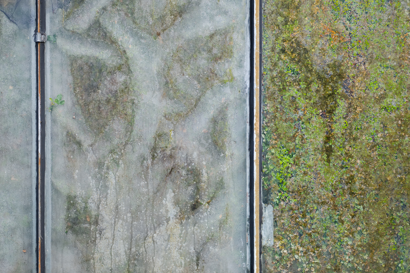 02.03.2019, Deutschland, Nordrhein-Westfalen, Bochum - Botanischer Garten der Ruhr Universitaet Bochum  in Bochum-Querenburg. Blick durch die Scheibe eines Gewaechshauses. Pflanzen und Blaetter.(Universtaetsviertel, Ruhr-Universitaet Bochum) MODEL RELEASE: NOT APPLICABLE, PROPERTY RELEASE: NO