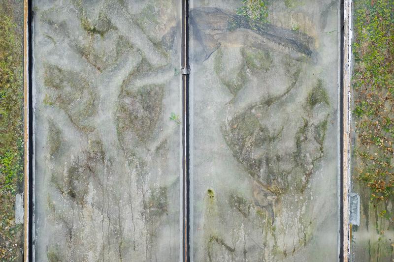 02.03.2019, Deutschland, Nordrhein-Westfalen, Bochum - Botanischer Garten der Ruhr Universitaet Bochum  in Bochum-Querenburg. Blick durch die Scheibe eines Gewaechshauses. Blaetter und Wassertropfen.(Universtaetsviertel, Ruhr-Universitaet Bochum) MODEL RELEASE: NOT APPLICABLE, PROPERTY RELEASE: NO
